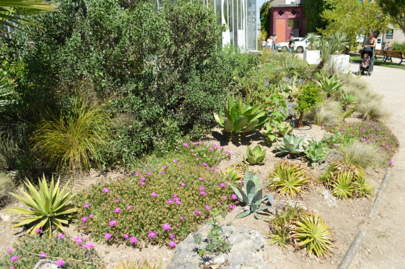 Nantes un apr s midi au jardin des plantes la minute d for Plante au jardin