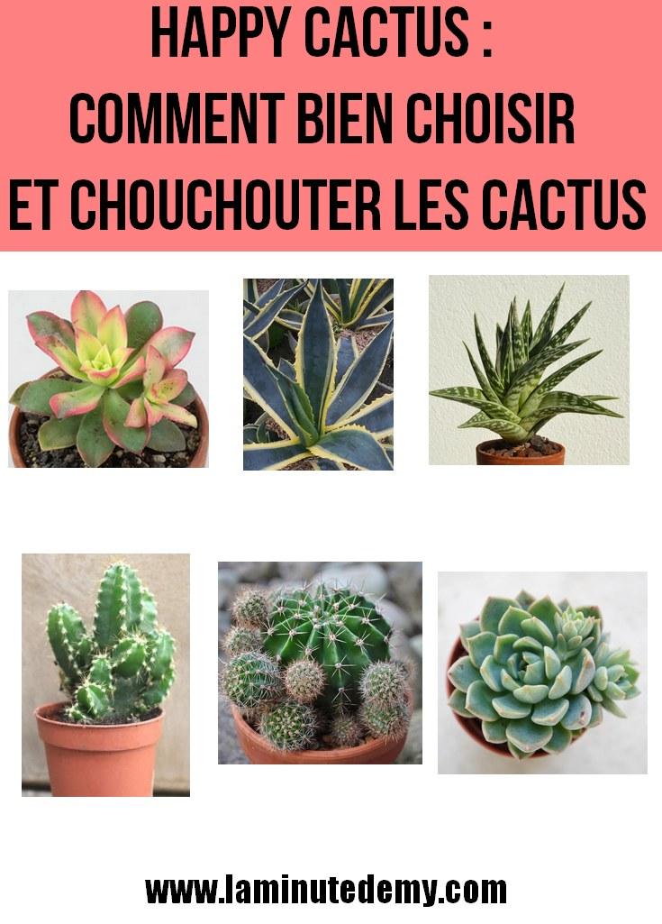 HAPPY CACTUS : Choix des plantes et comment les chouchouter ?